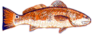 fl fishing inshore guide redfish captain david proctor